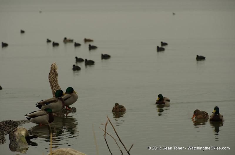 01-26-13 White Rock Lake - IMGP4324.JPG