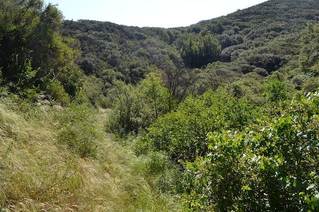 lush green area