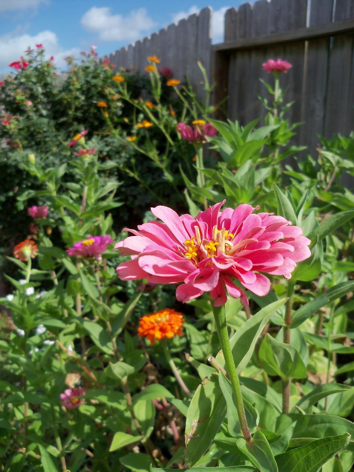 Gardening 2011 - 100_9976.JPG