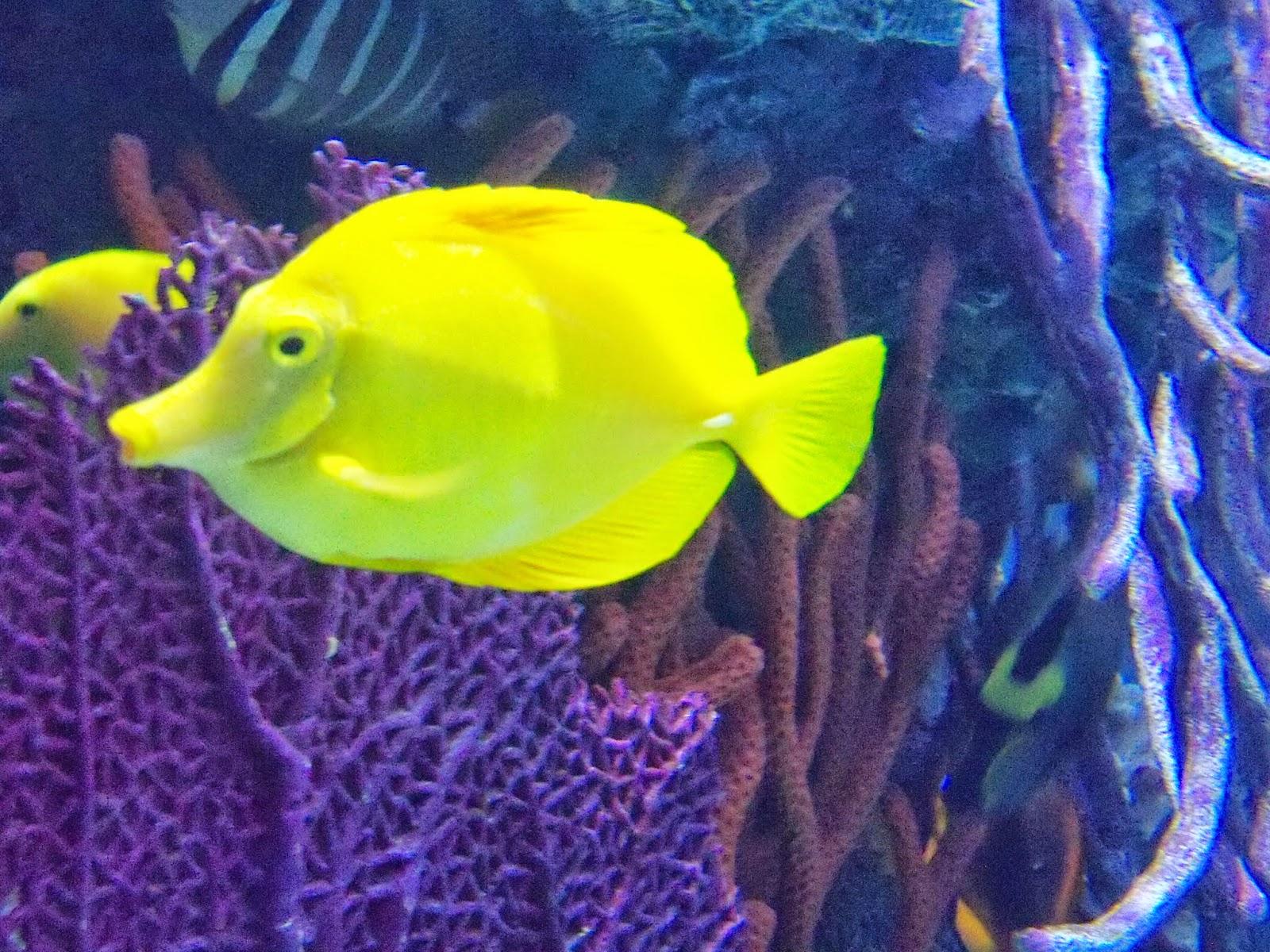Downtown Aquarium - 116_3930.JPG