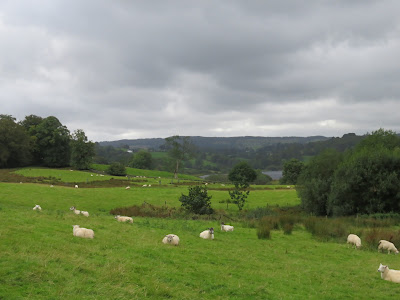 hill and sheep
