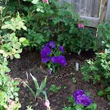 Gardening 2011 - 100_6964.JPG