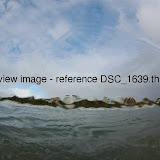 DSC_1639.thumb.jpg