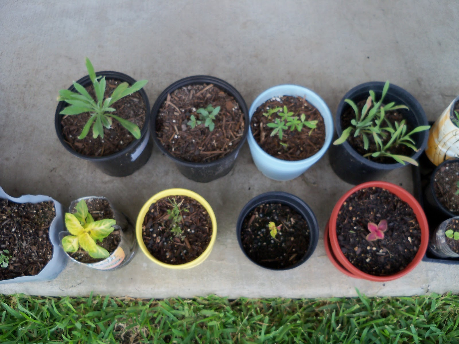 Gardening 2010, Part Two - 101_2800.JPG