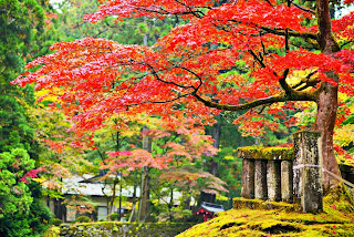 Foliage in Nikko