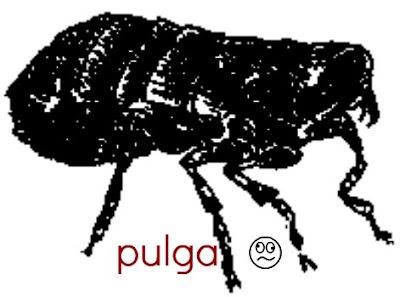pulga (2).jpg
