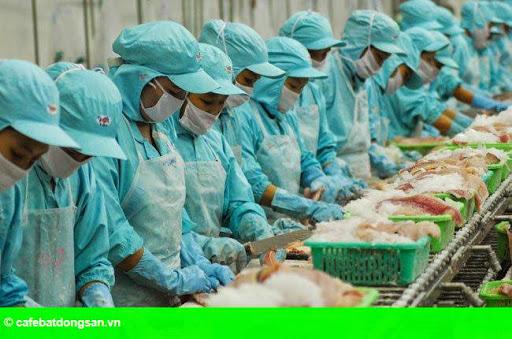 Hình 1: Doanh nghiệp thủy sản: Yếu vì tỷ giá