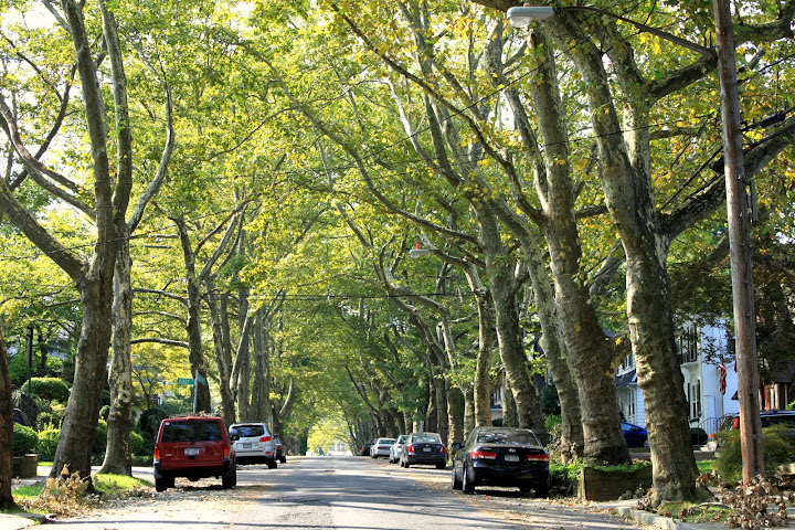 Tree lined Street in Randall Manor Staten Island
