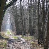 L'allée forestière, le 16 mars 2012. Les Hautes-Lisières (Rouvres, 28). Photo : J.-M. Gayman