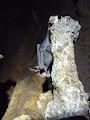 Bat on a stal | photo © HughStLawrence