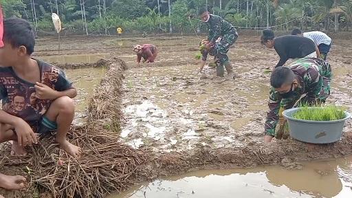 Varietas Padi Lokal Masih Digunakan Petani di Desa Siuhom