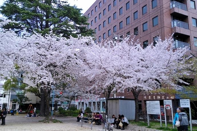 8 大阪賞櫻景點 堀江公園 味處和風亭