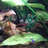 Fish - IMG_20121015_192450.jpg