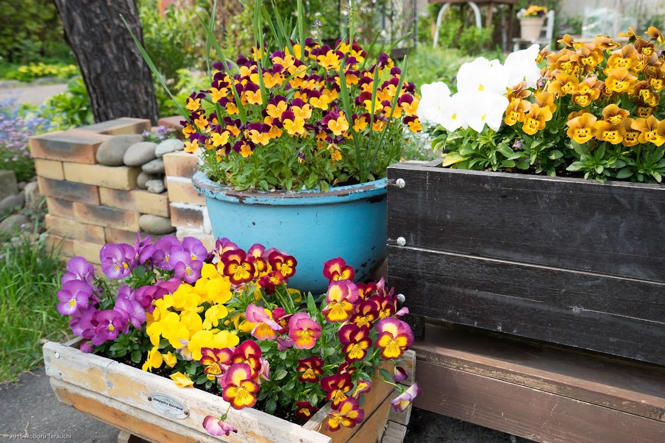 佐野豊町長宅を飾る花々