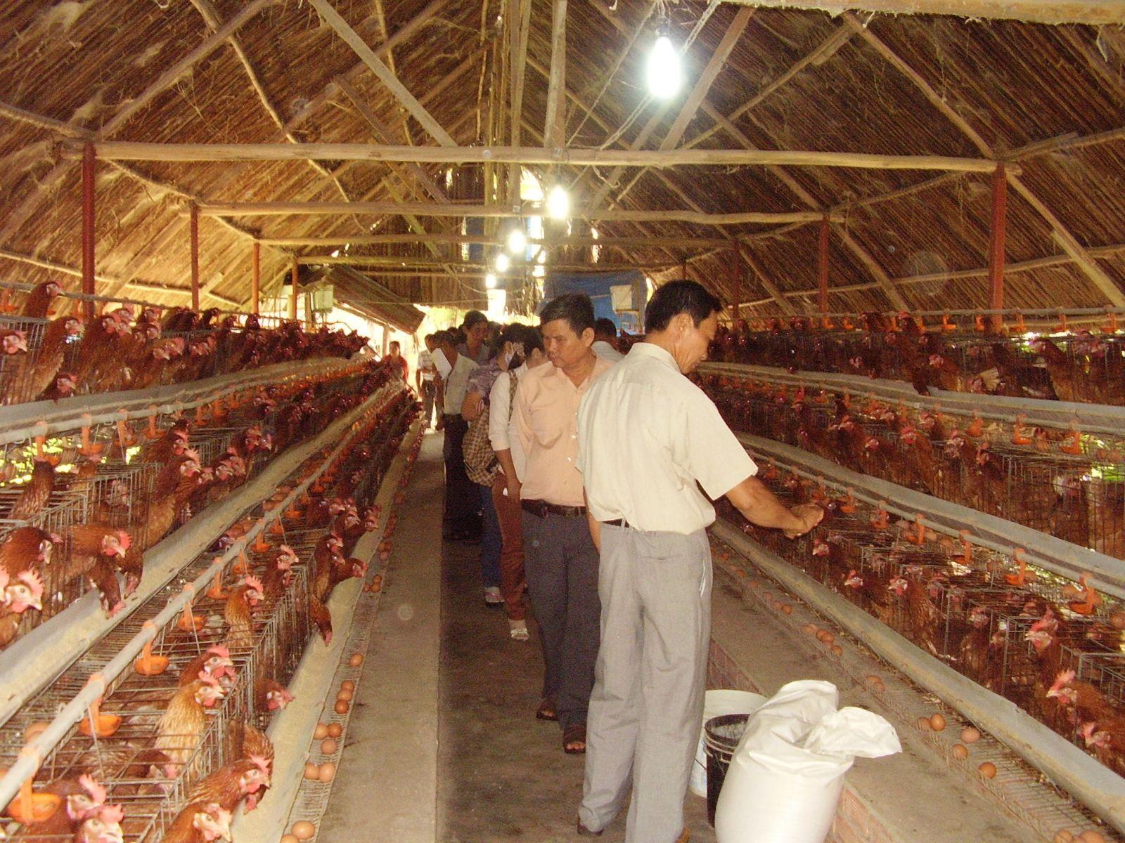 Hướng dẫn kỹ thuật chăn nuôi gà công nghiệp - 55bdddb477454
