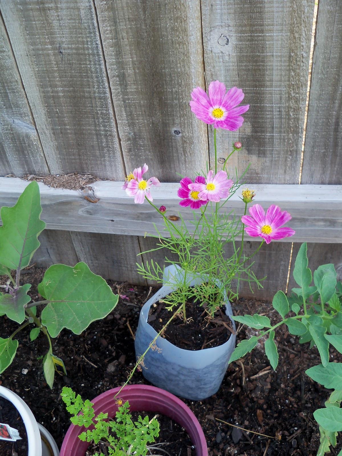 Gardening 2010, Part Two - 101_1895.JPG