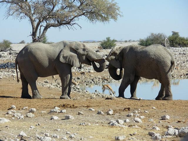أفضل ما في أفريقيا  Best of Africa Namibia_180807143451