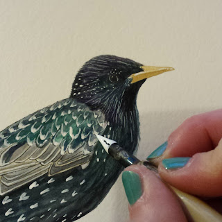 starling by www.AliceDrawsTheLine.co.uk