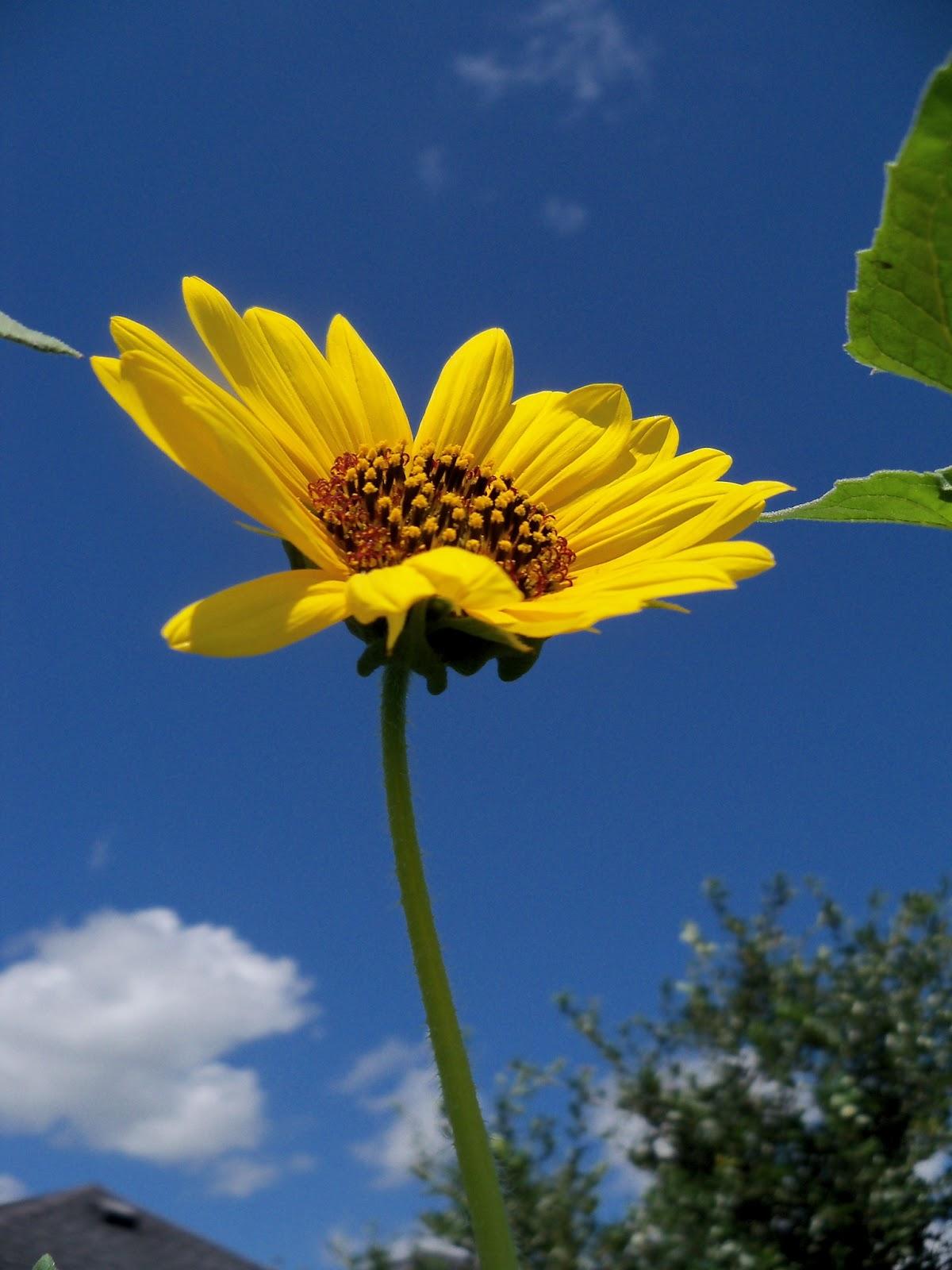 Gardening 2012 - 115_2525.JPG
