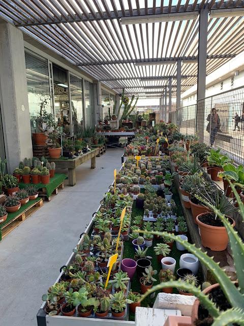 Plantas de exterior garden FUPAR