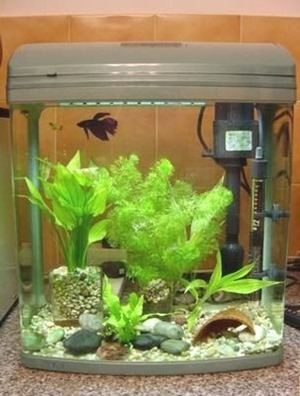 5-gallon-betta-fish-tank-(1)