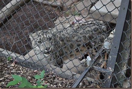 08-17-16 Boise Zoo 49