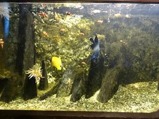 2016.03.14-038 poissons