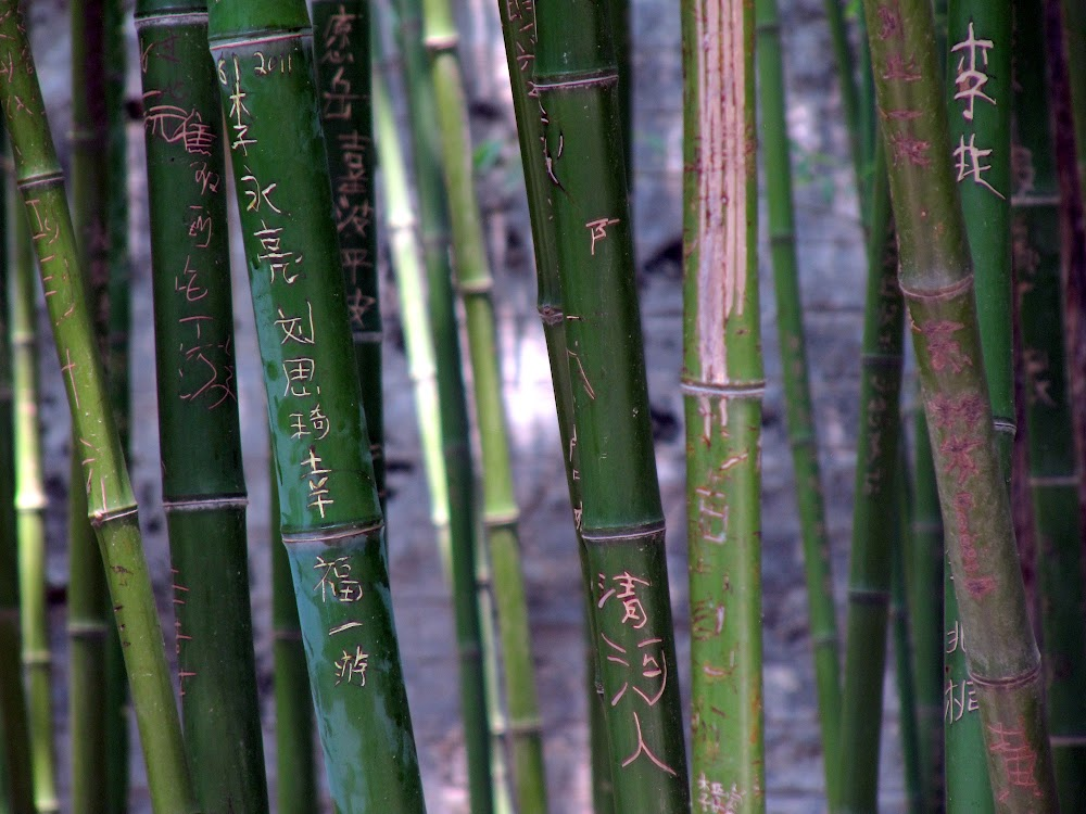 Inscribed bamboo in Beihei Park