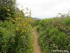 Hazelnut Trail.