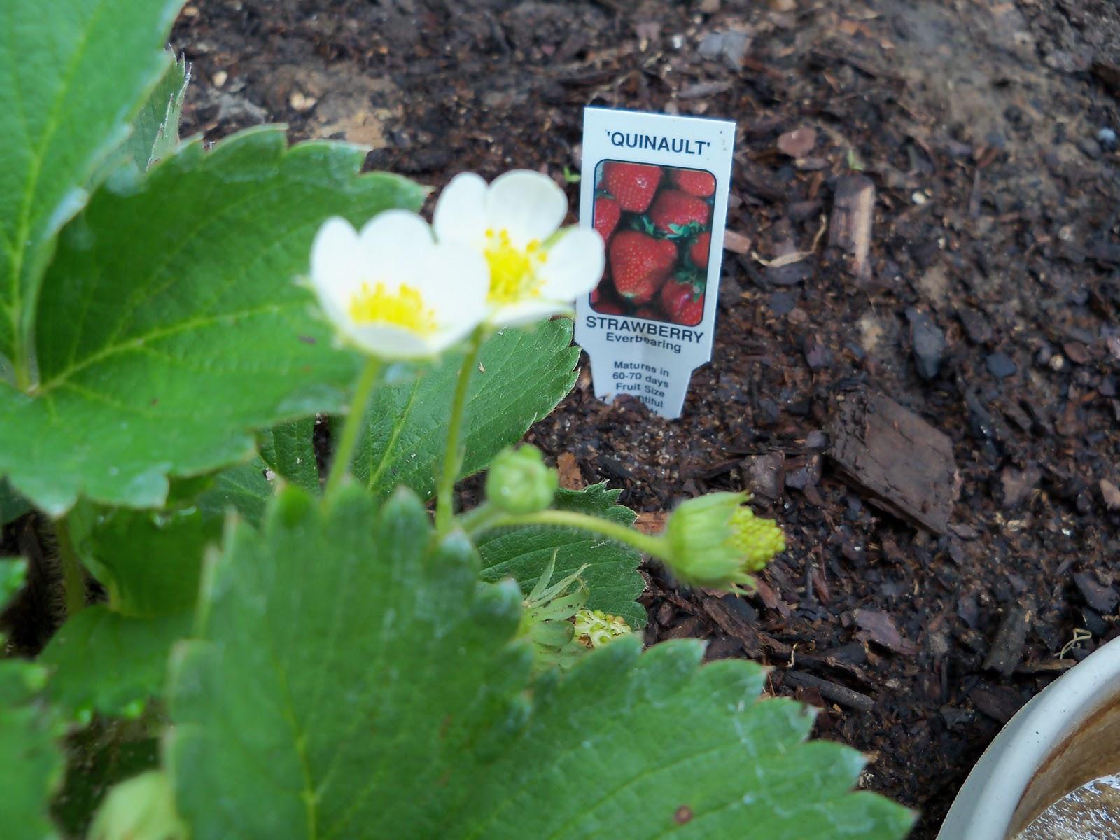 Gardening 2010, Part Two - 101_3072.JPG