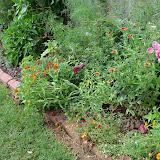Gardening 2010, Part Three - 101_3641.JPG