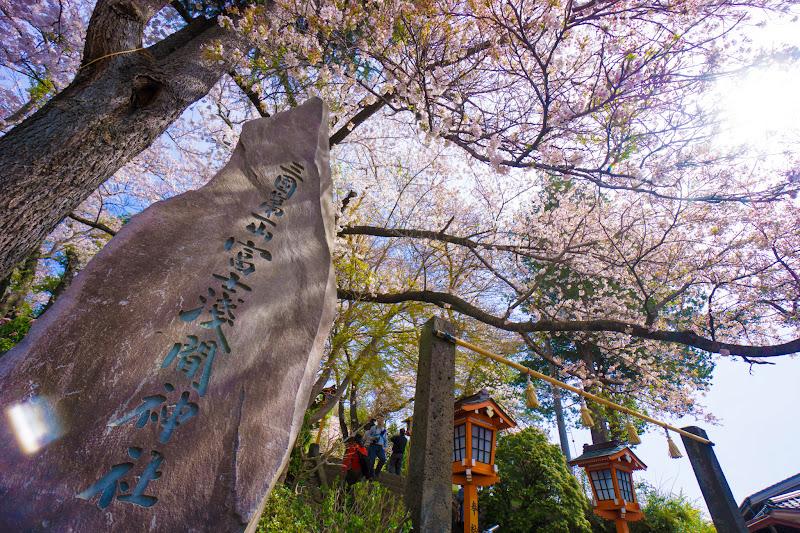 新倉富士浅間神社 桜 写真1