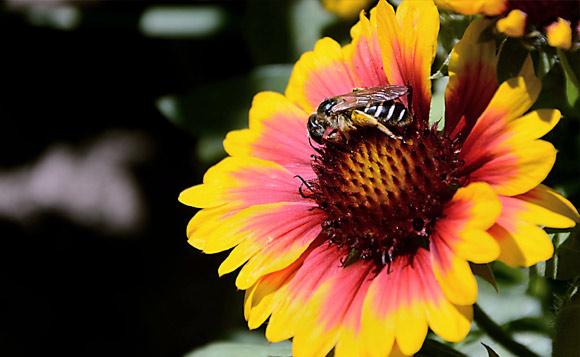 Lebah dan Madu