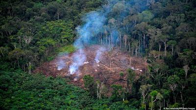 Documento sobre desmatamento na Amazônia pode ter chegado a ponto irreversível