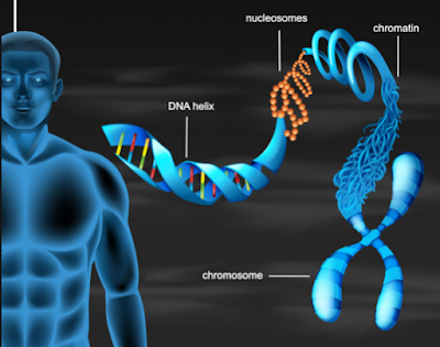 Human Made with DNA