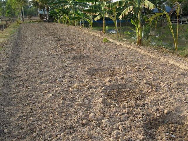 อยู่แบบพอเพียง ปลูกข้าวโพดข้าวเหนียวสร้างรายได้เสริม