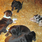 Star's girls at 4 weeks