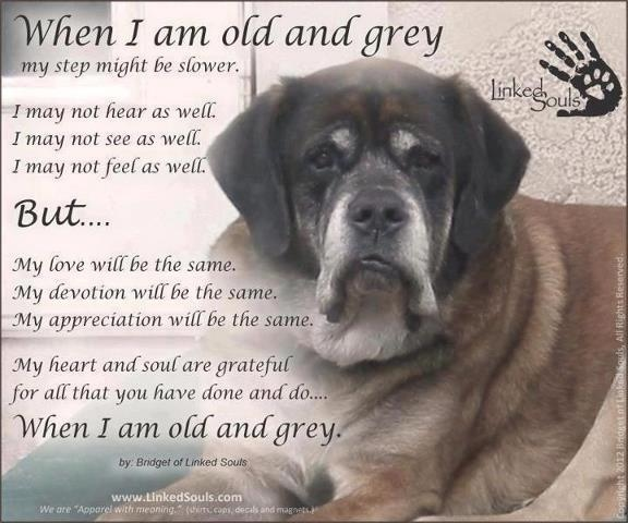 Old Dog Quotes And Sayings. QuotesGram
