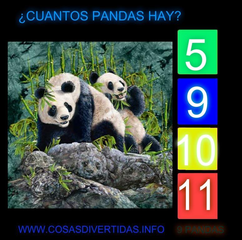 [oso-panda3]