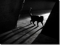 gato-a-noite