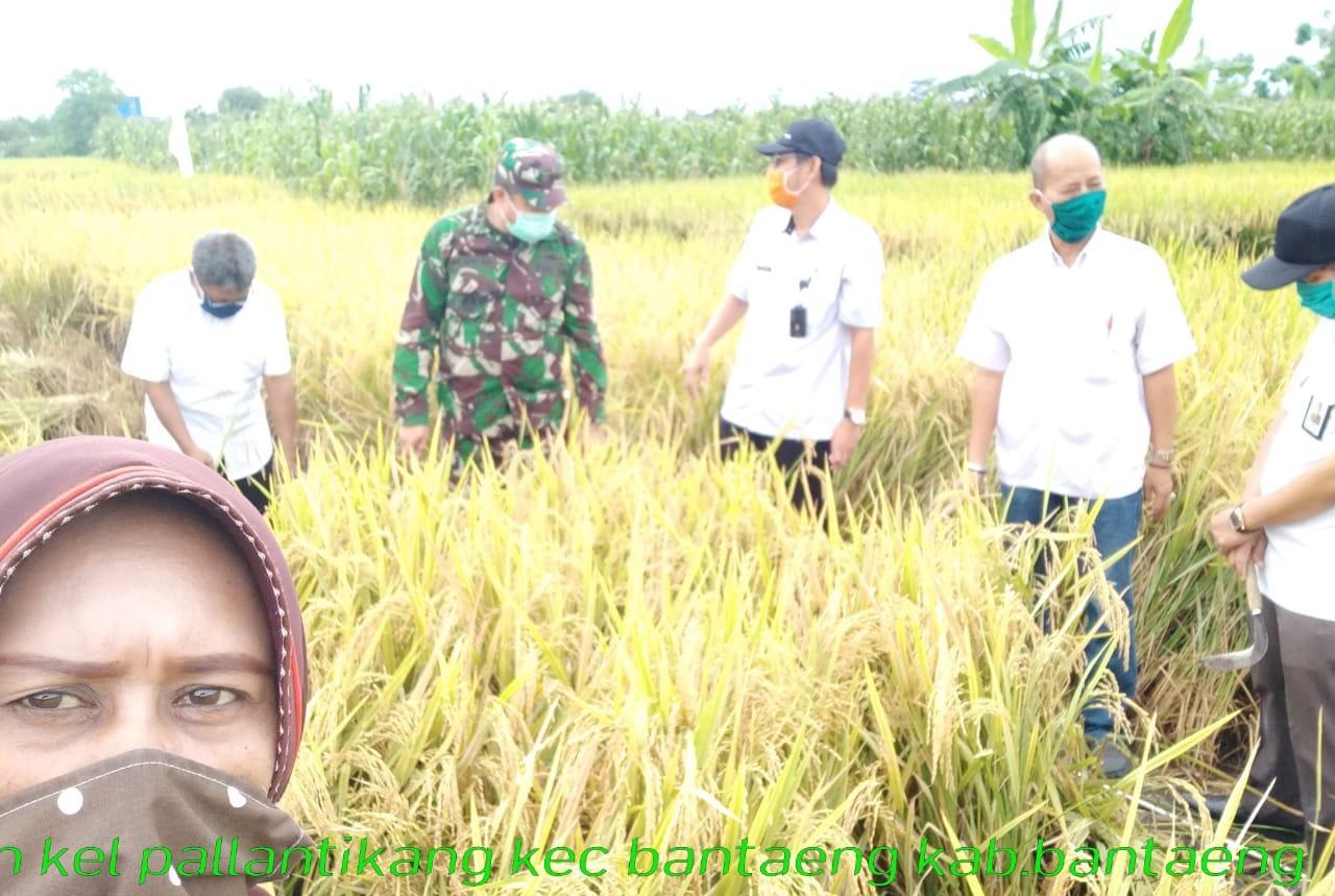 Kebersamaan Penyuluh dan Petani Tingkatkan Produksi Padi di Bantaeng