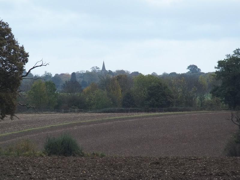 Fields near Homewood