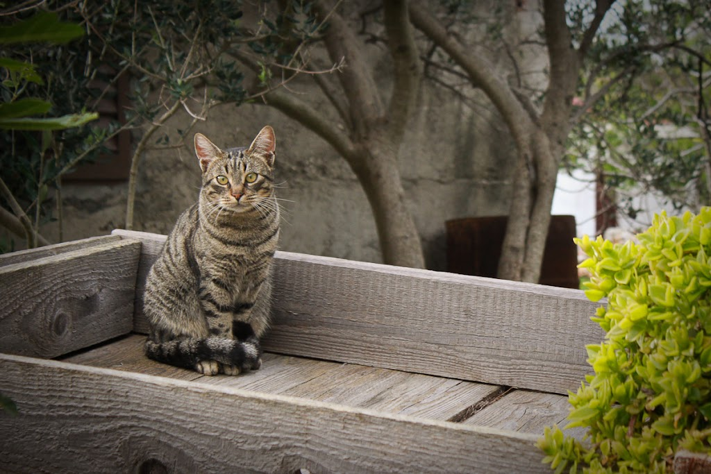 Croatia - Silba, Zadar, sky, cats, windows - Vika-8176.jpg