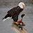 kscotthoy avatar image