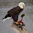 Scott Hoy avatar image