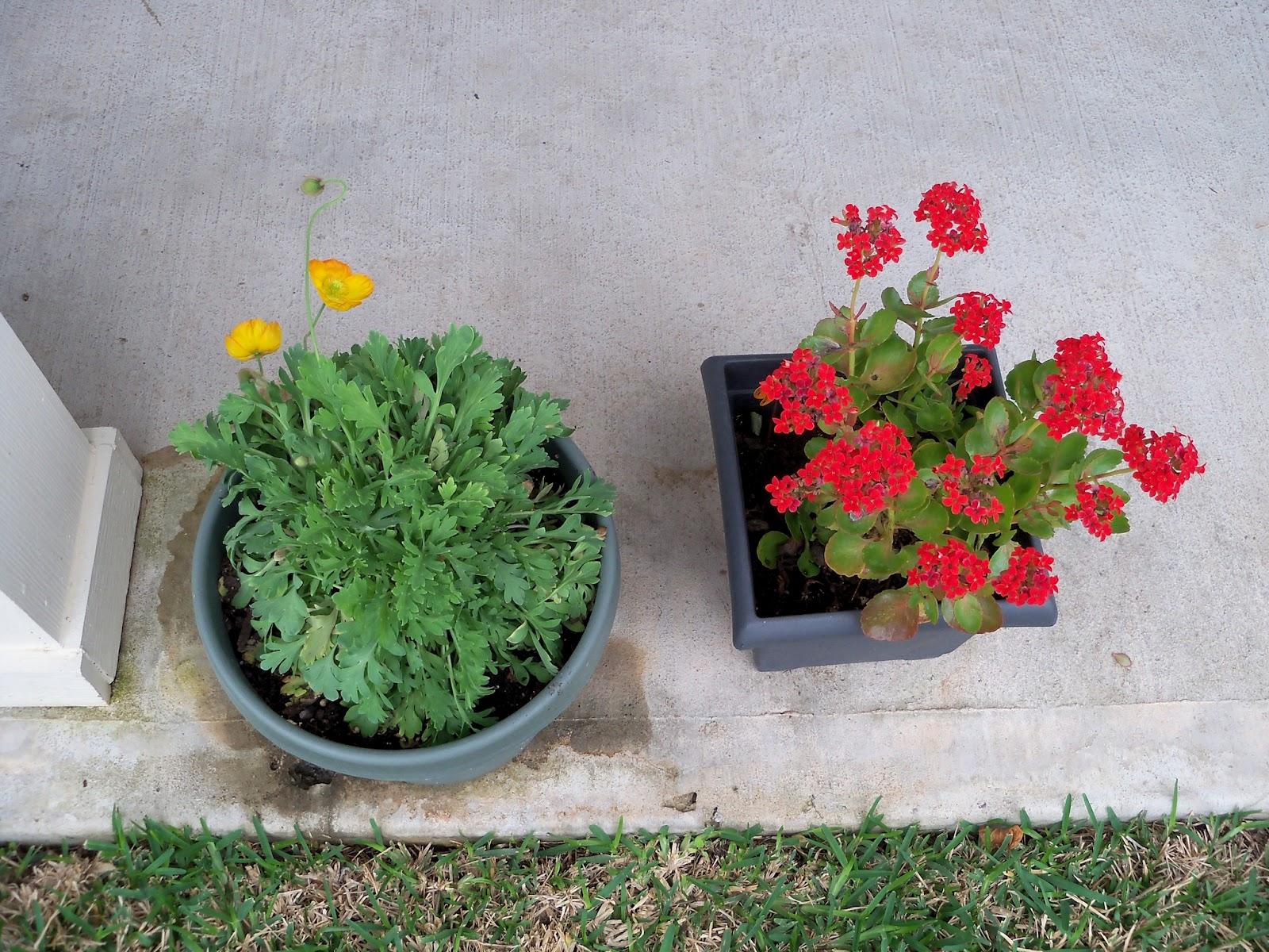 Gardening 2011 - 100_7214.JPG