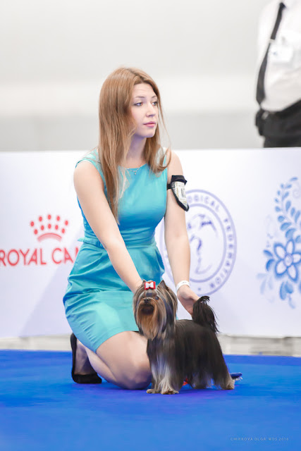 World Dog Show-2016 0105