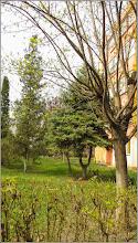 Photo: Turda - Calea Victoriei - Bloc B16  - 2019.04.04