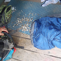 """Remember the """"Small Bear"""" in the first few photos....he made this mess on the first day, but 5 days later the scout was still sleeping on these seeds...."""