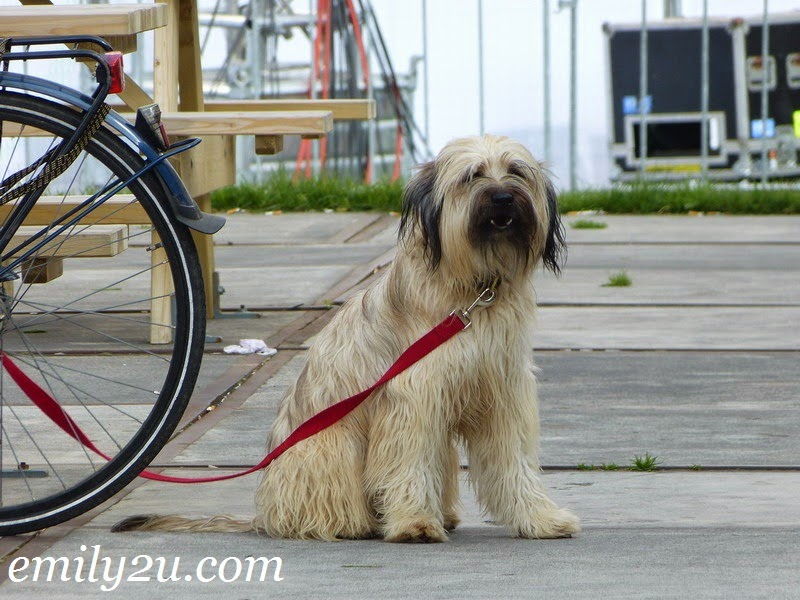 dogs in the Netherlands